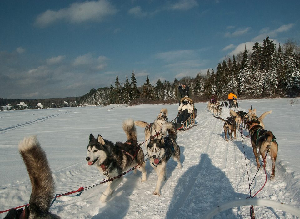 Dog sledding in Chamonix