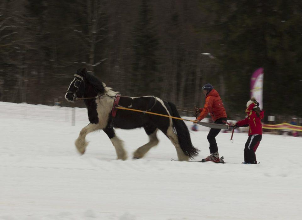 Skijoring Chamonix
